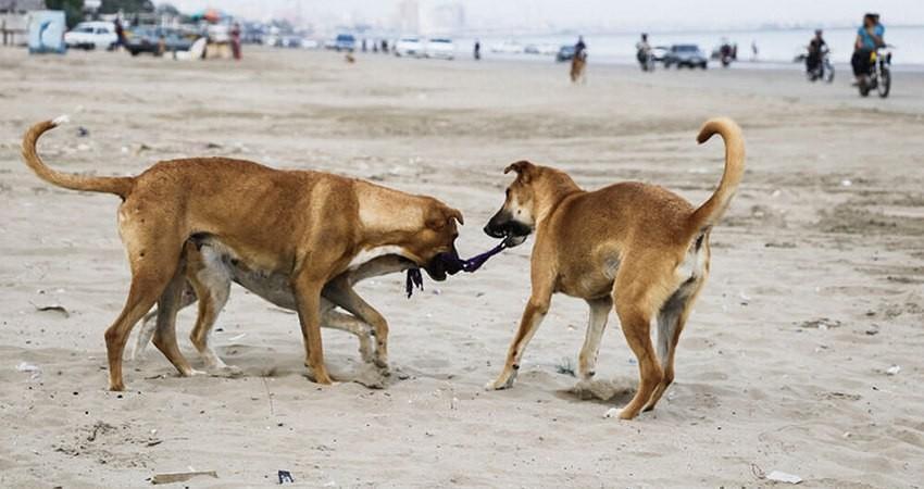 آیا مرگ با ترحم سگ های بدون صاحب، دستورالعمل وزارت کشور است؟