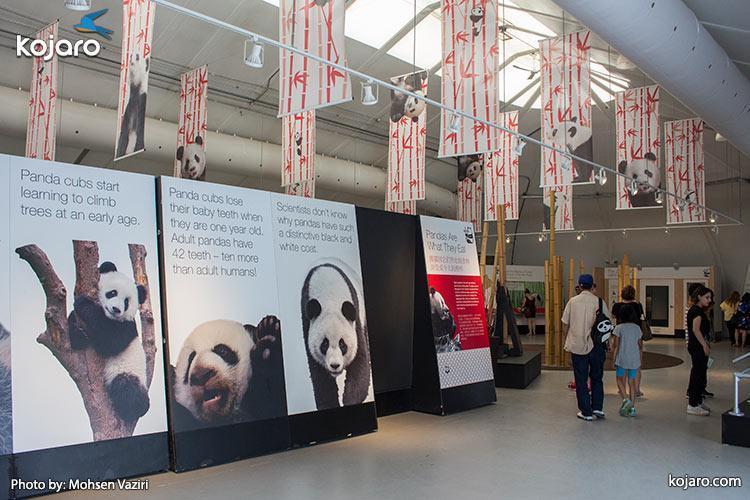 گزارش اختصاصی خبرنگاران از باغ وحش تورنتو