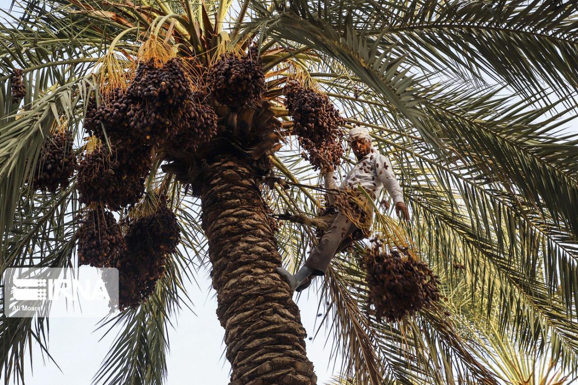 خبرنگاران فعالان اقتصادی بوشهر ازتسهیلات 4000 میلیارد ریالی صادراتی استفاده کنند