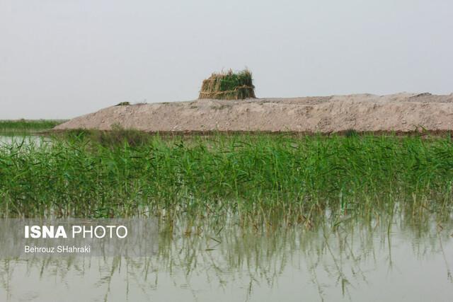 شروع عملیات اجرایی انتقال آب به مزارع کشاورزان سیستان وبلوچستان