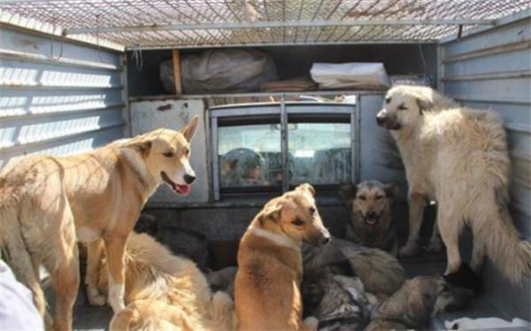 مراحل پایانی ساخت کلینیک درمانی سگ های بدون صاحب آرادکوه